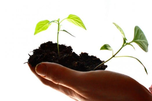 Seedlings in hand