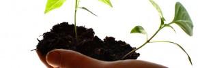 Seedlings in hand